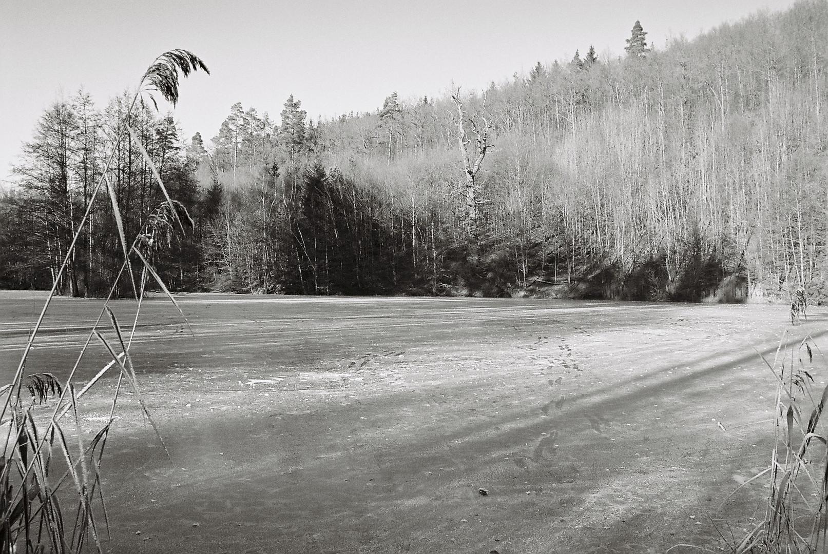 Sommertalweiher im Winter