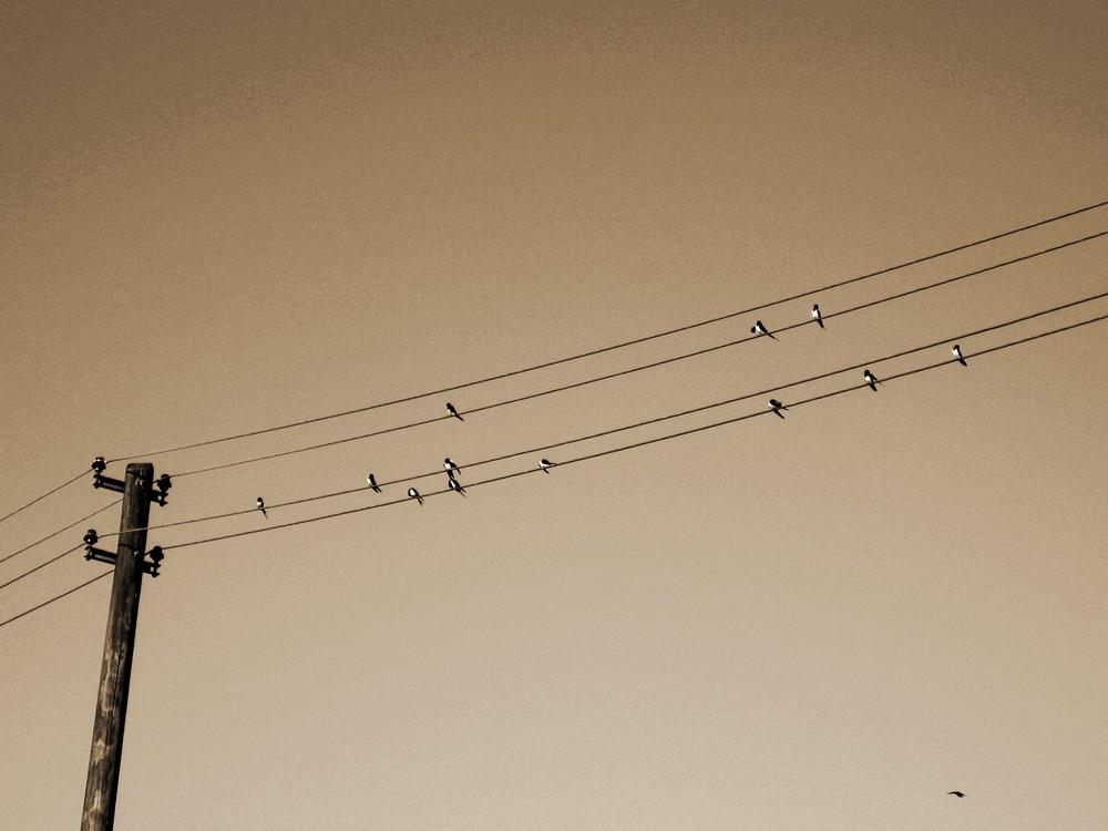 Sommervögel