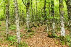 Sommerwald II