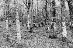 Sommerwald II sw