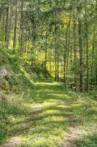 Sommerwaldgang