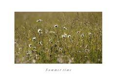 Sommerwiese (2 Kopie Kopie)