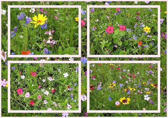 Sommerwiese entdeckt