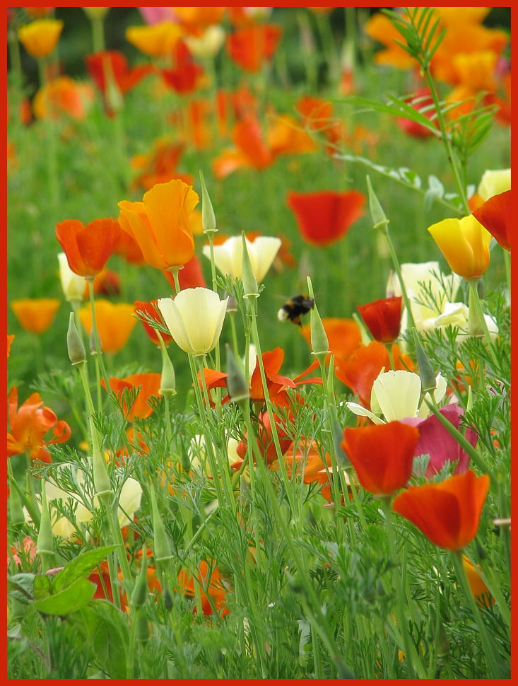 Sommerwiese im Frühling