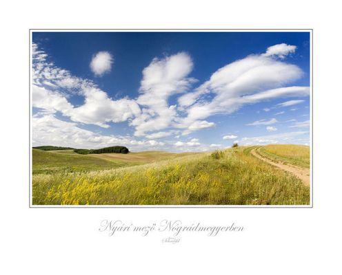 Sommerwiese in Nógrádmegyer - Nordungarn