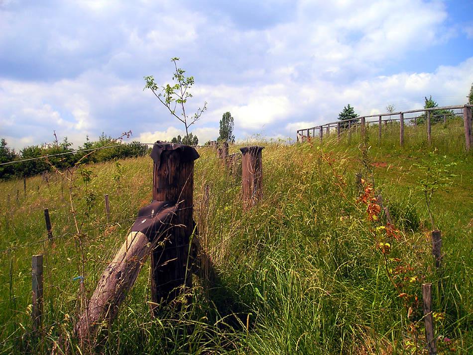Sommerwiese mit Zaun