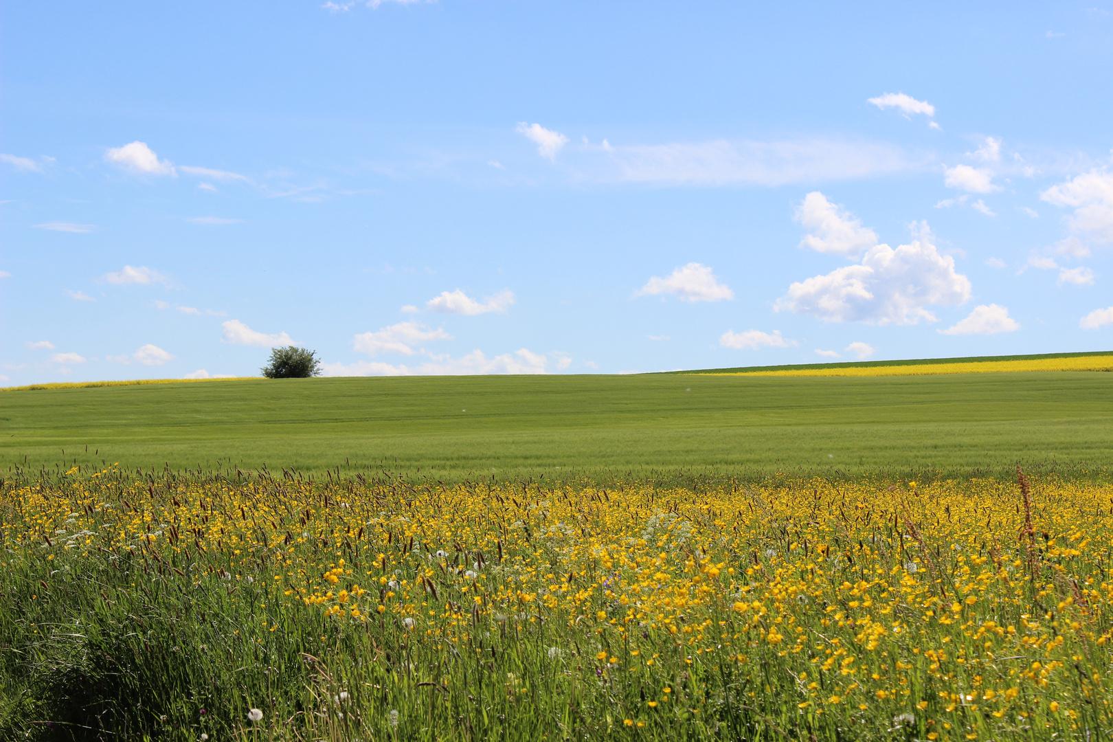 Sommerwiesen