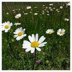 Sommerwiesen machen gute Laune!