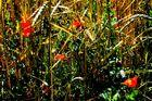 Sommerwiesenstück