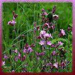 Sommerzeit - Blütenzeit