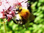Sommerzeit, Insektenzeit...