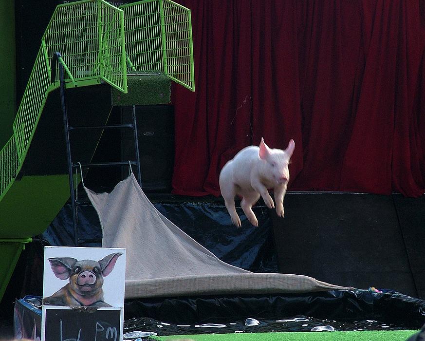 ...sondern auch Schweinchen durch die Luft.