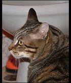 Soneca My cat