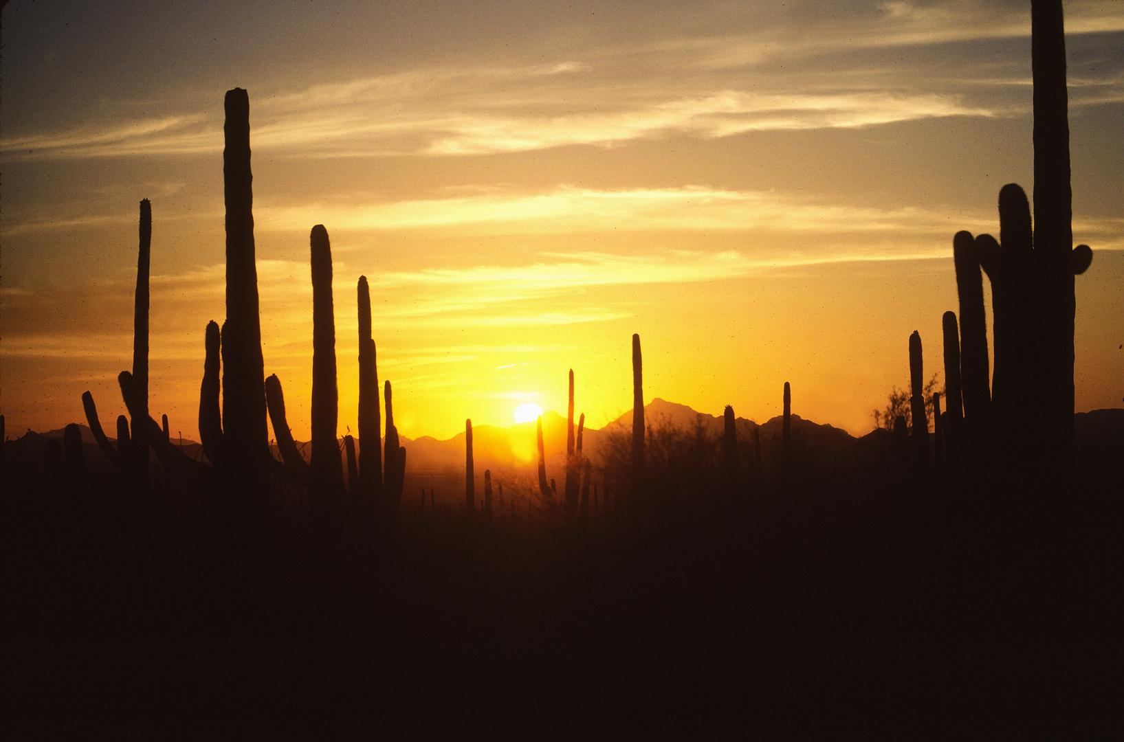 Sonenuntergang in der Sonora Wüste, AZ