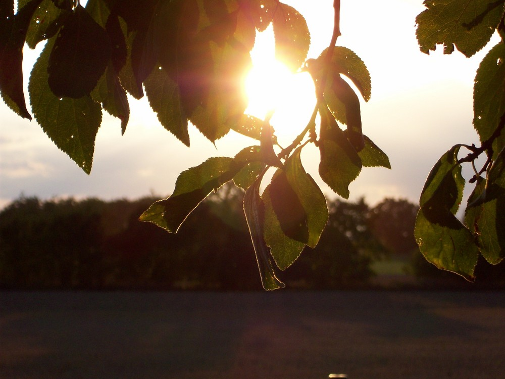 ...Sonne