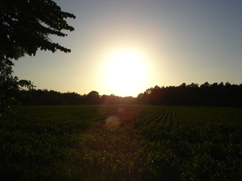 Sonne als Lebenskraft