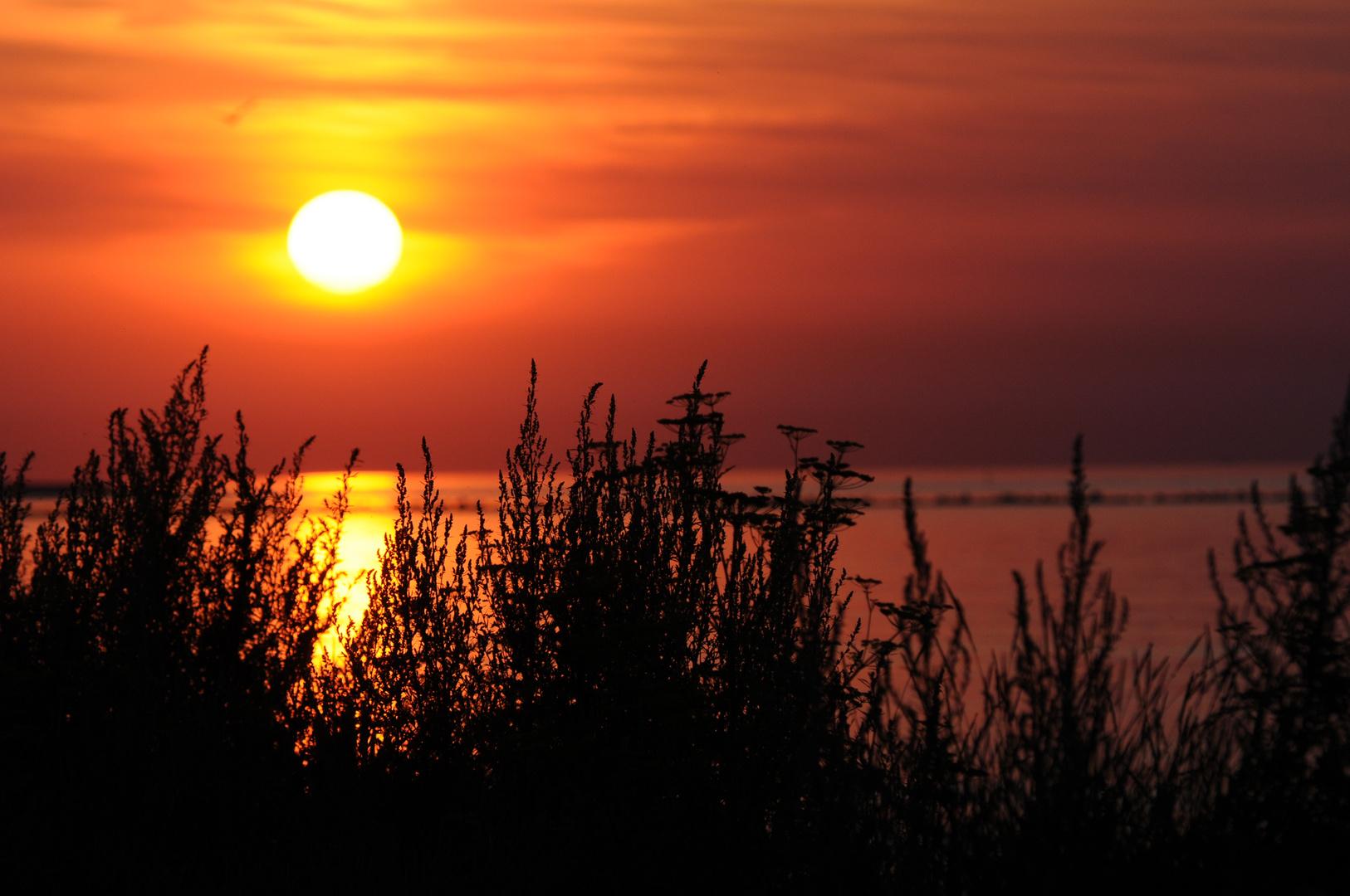 Sonne am Abend