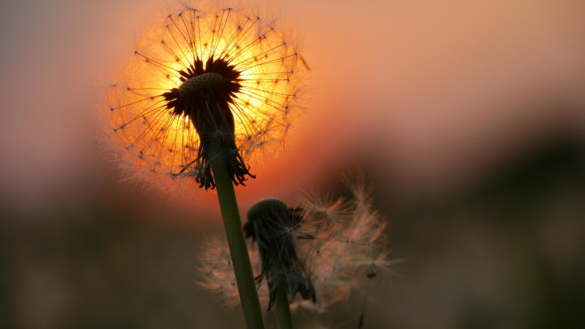 Sonne am Stiel ;-)