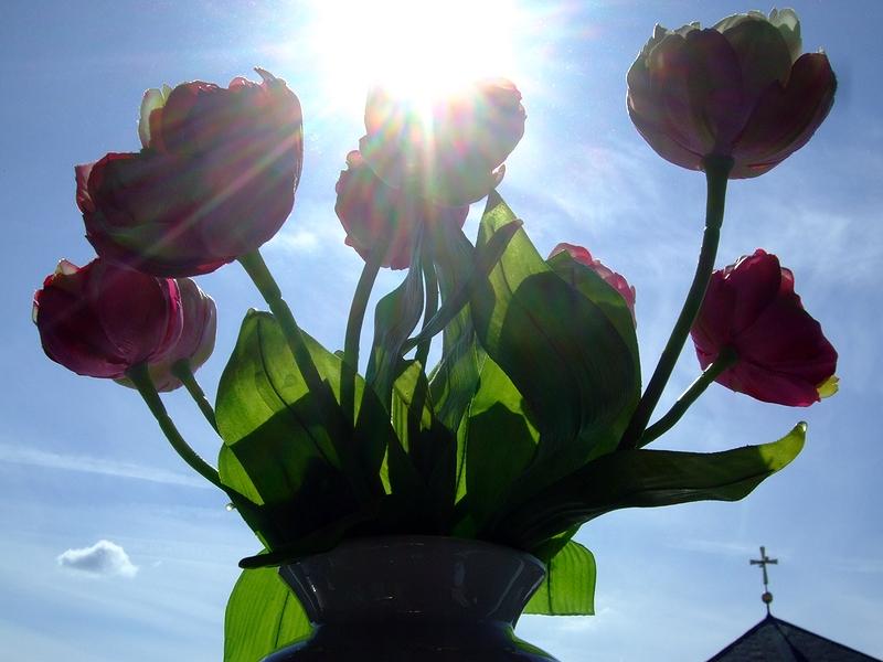 Sonne, Blumen, Himmel... :-)
