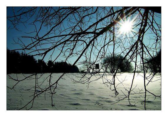Sonne durch Baum 02