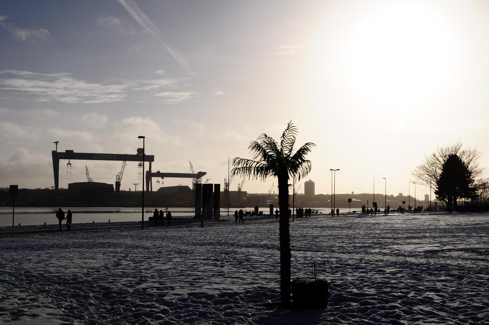 Sonne, eine Palme und viel Schnee.....was ist hier falsch?