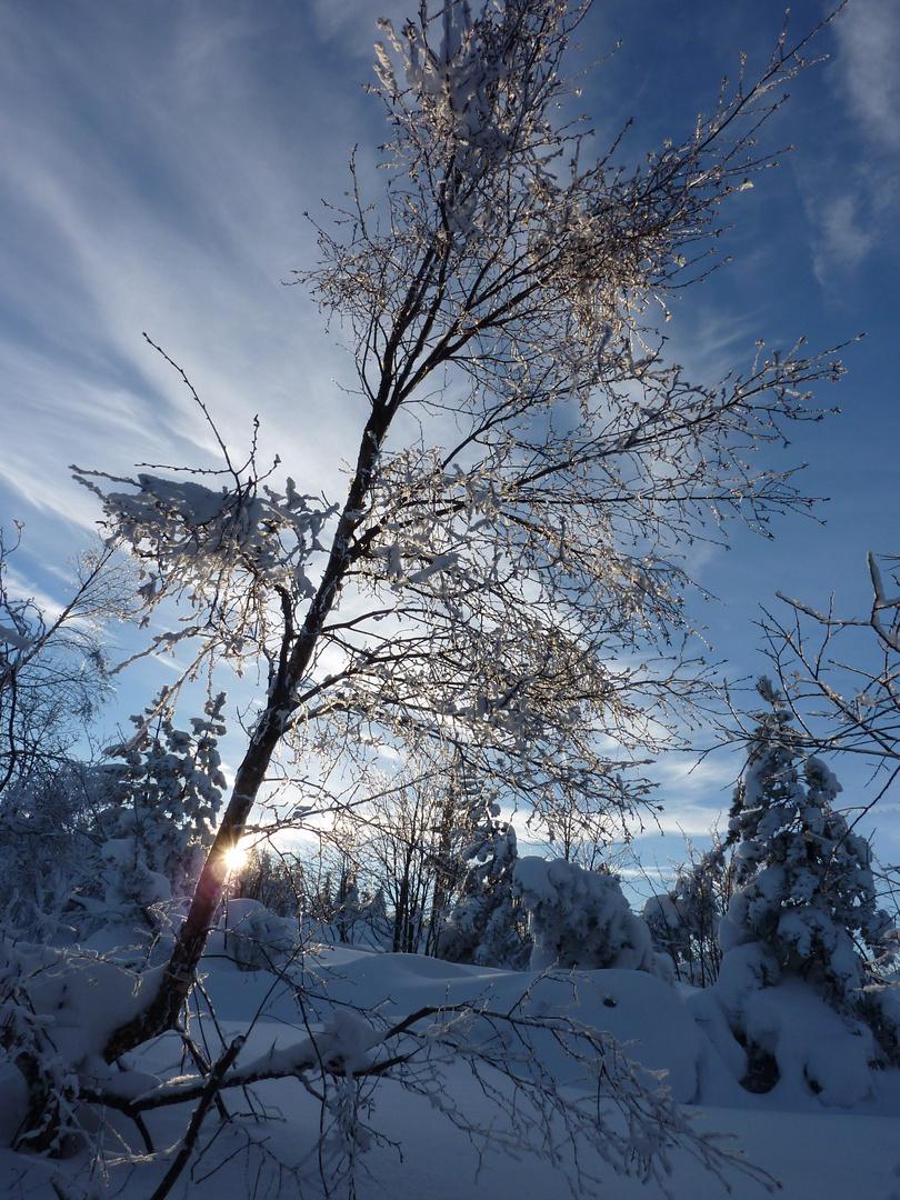 Sonne, Eis und Schnee - welch eine Pracht!