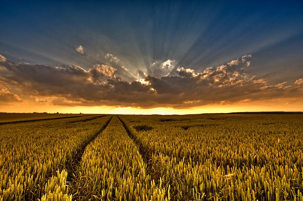 Sonne, Feld und Wolken