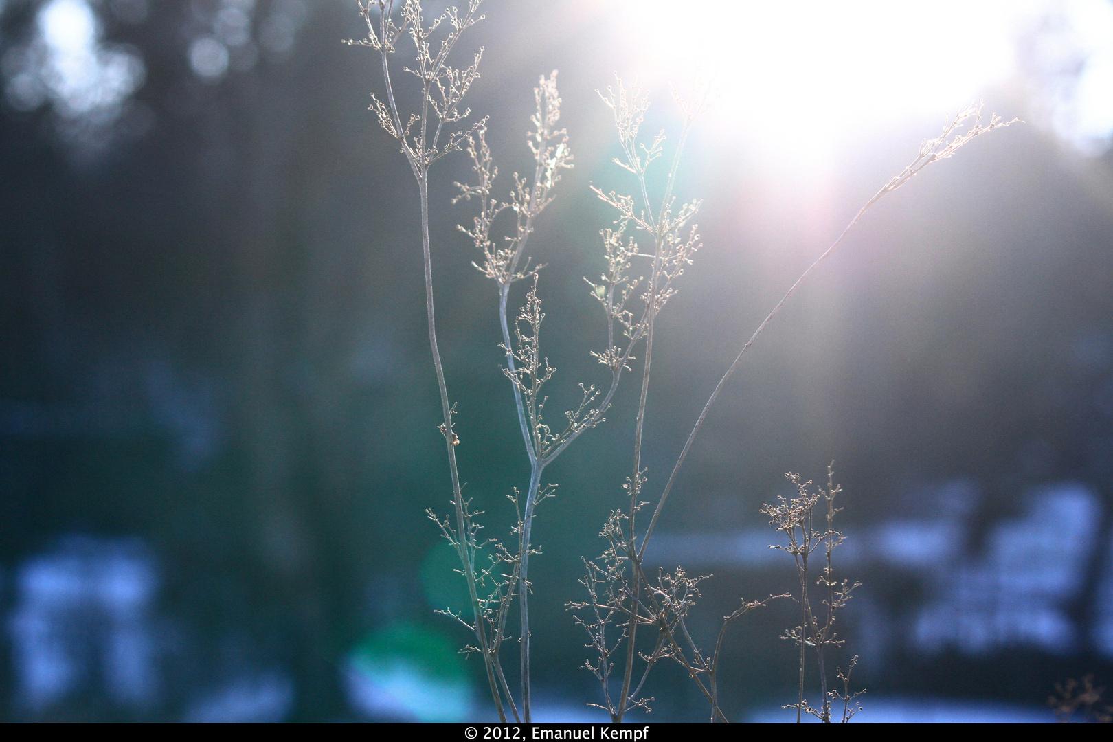 Sonne hinter Busch