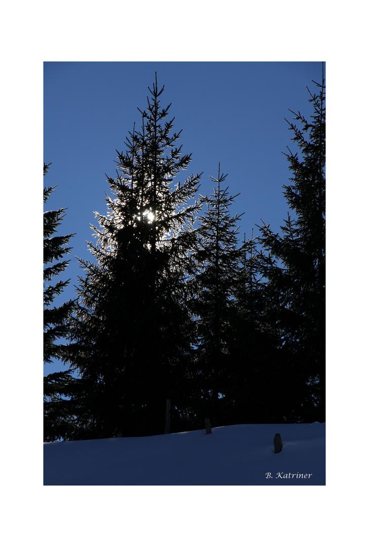 Sonne hinter den Bäumen