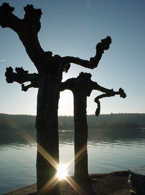 Sonne im Bodensee