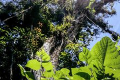 SONNE in CUBA Baum Mischwald