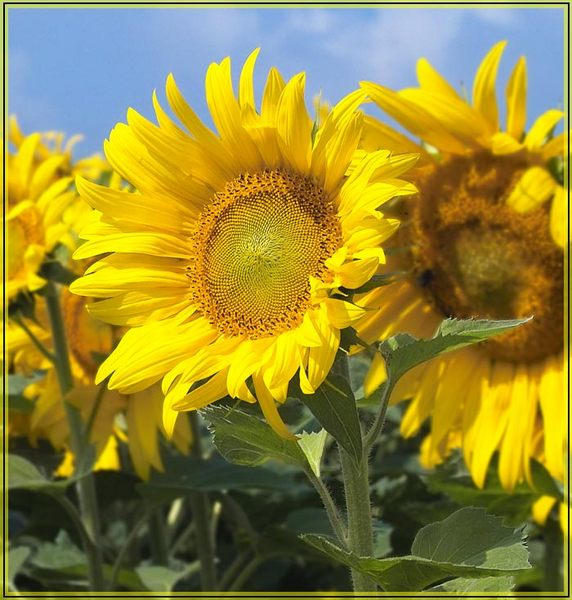 Sonne natur