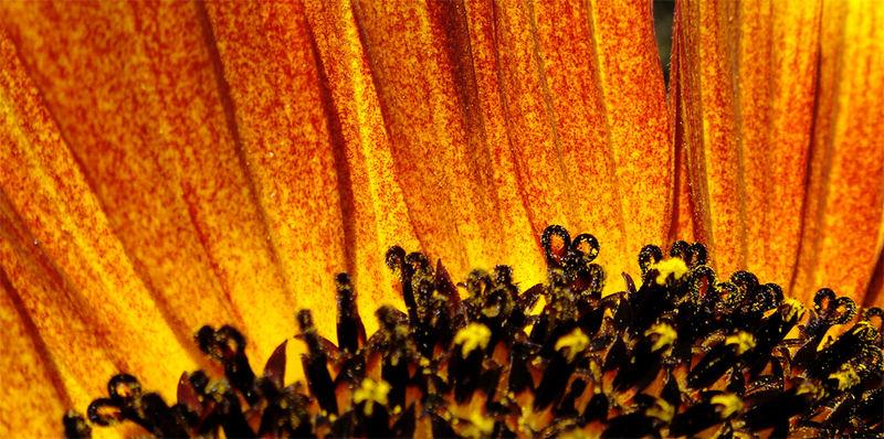 Sonne oder Blume?