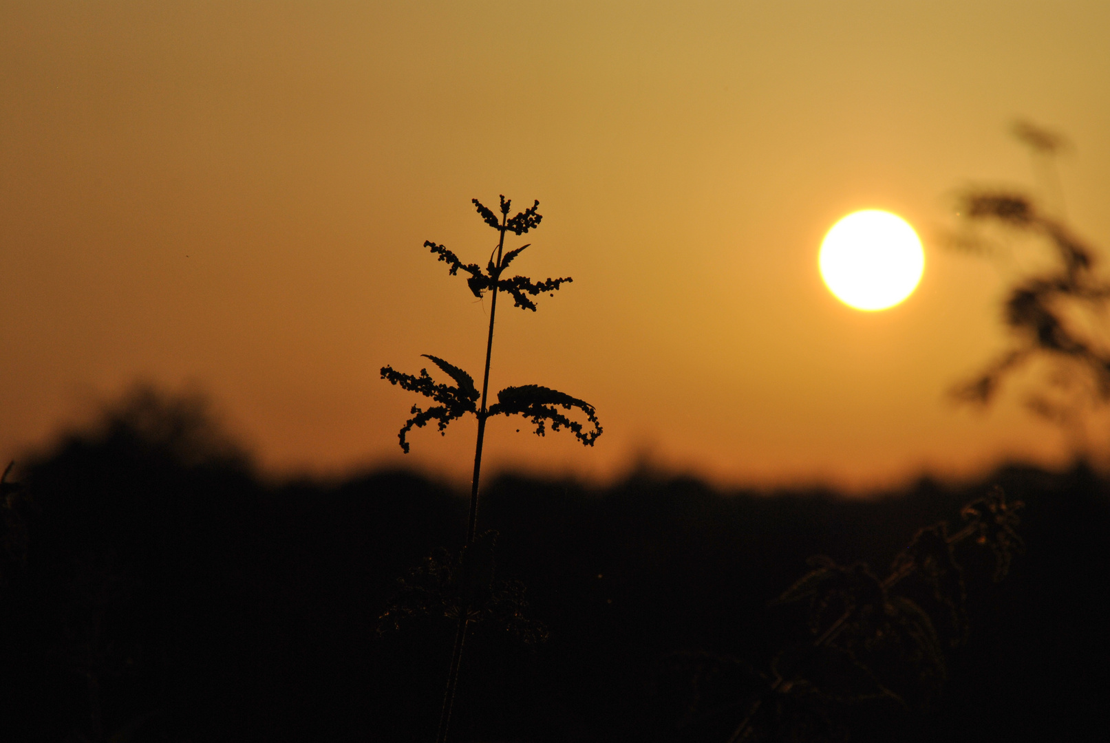 Sonne oder Brennnessel