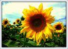 Sonne sagen die Blumen