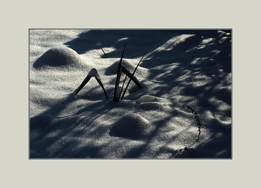 - Sonne & Schatten -
