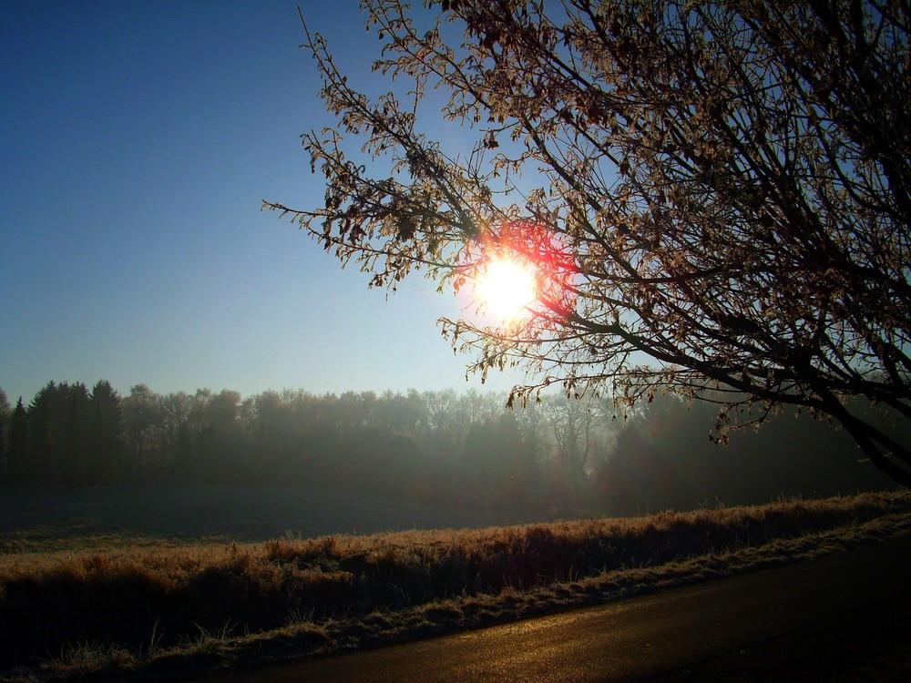 Sonne scheint duch Baum