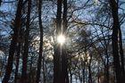 Sonne scheint in den Wald