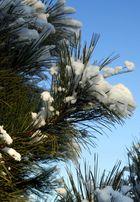 Sonne &. Schnee