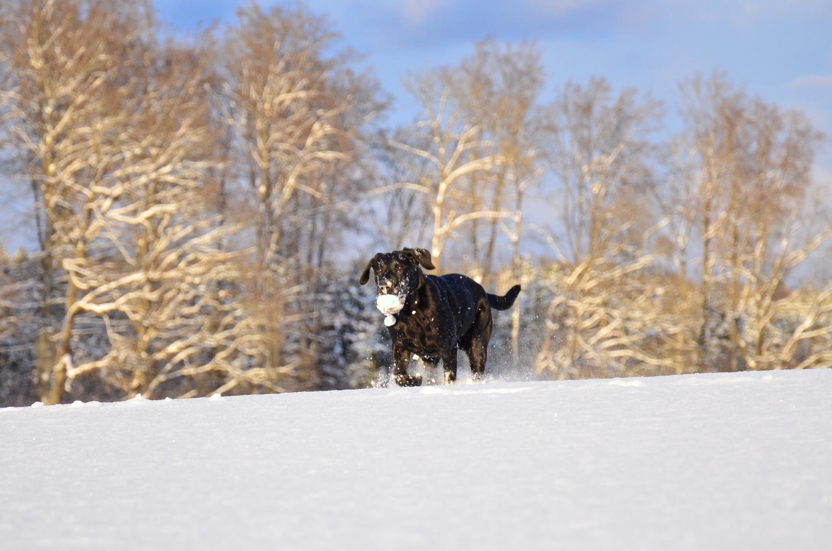 Sonne, Schnee und Ball - Beau im Glück