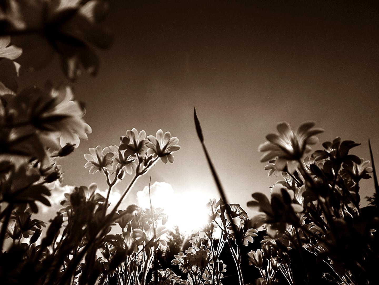 Sonne strahlt auf Blumen