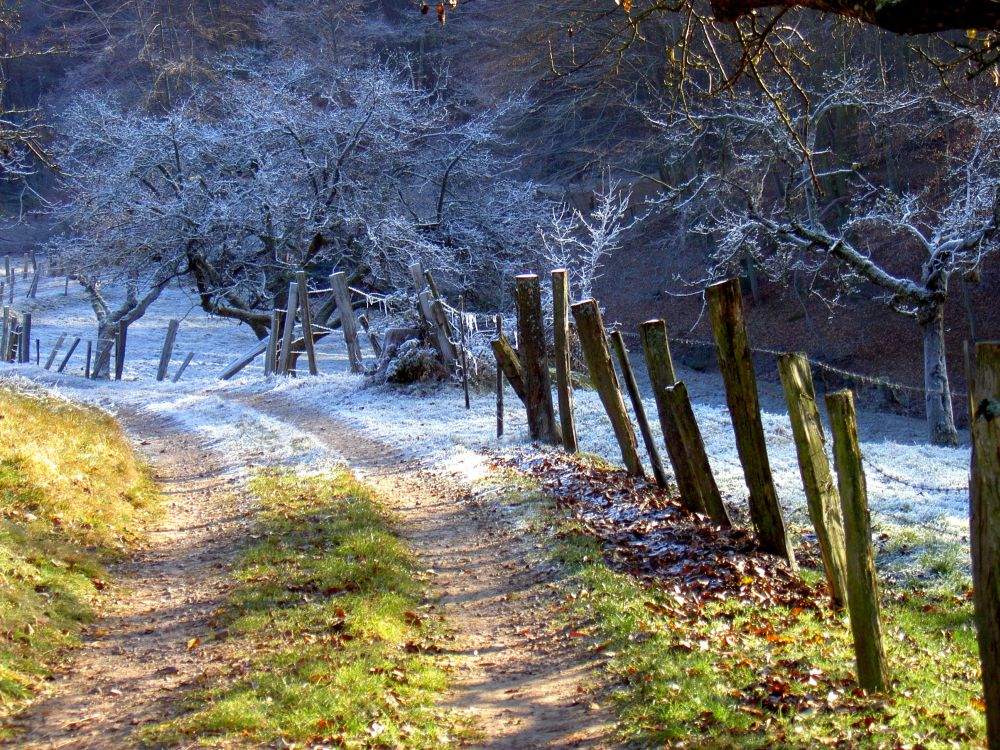 Sonne trifft Frost