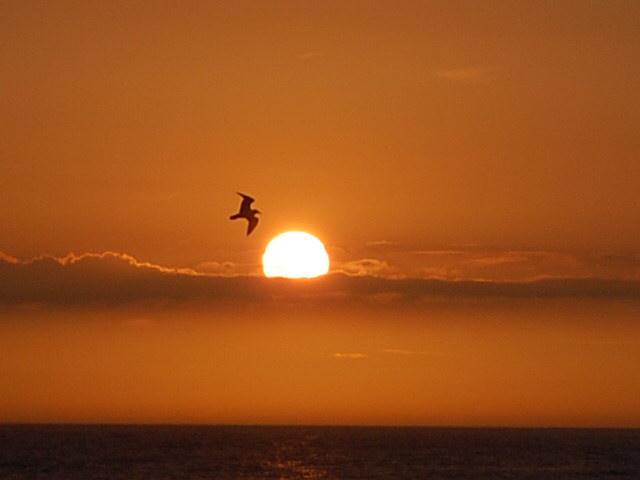 Sonne trifft Möve