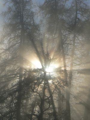 Sonne trifft Nebel 1