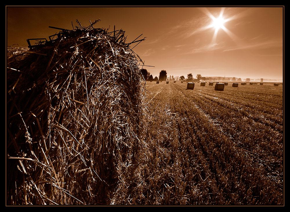 Sonne über Feld mit Strohballen