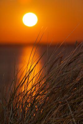 Sonne und Dünengras