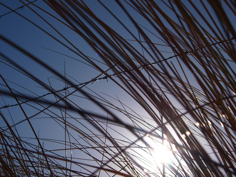 Sonne und Gras
