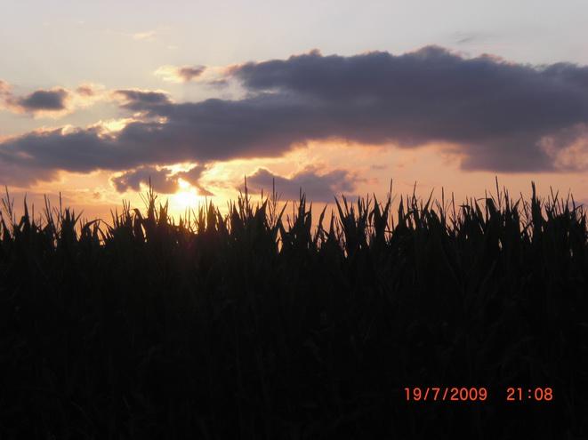Sonne und Mais