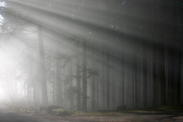 Sonne und Nebel (Nr1)...