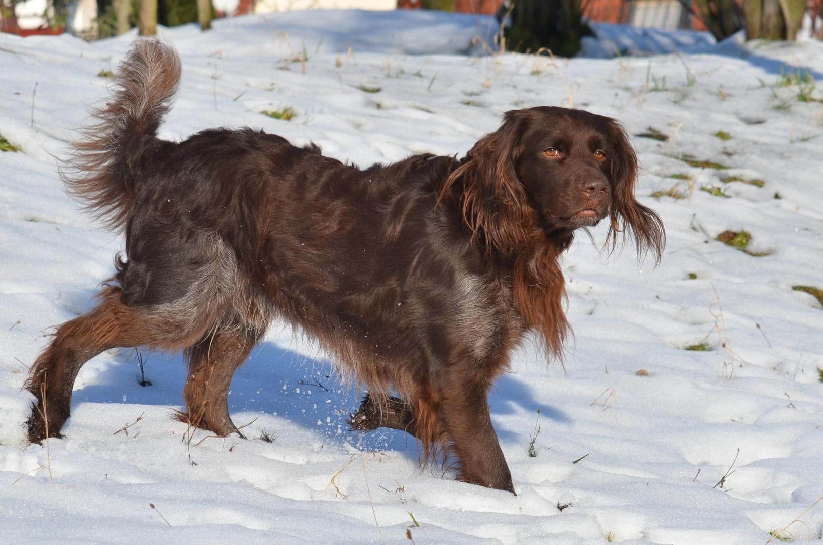 Sonne und Schnee, was will Hund noch mehr